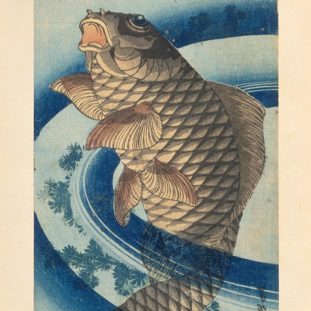 A brown scaled carp swims upward, surrounded by swirling dark blue lines