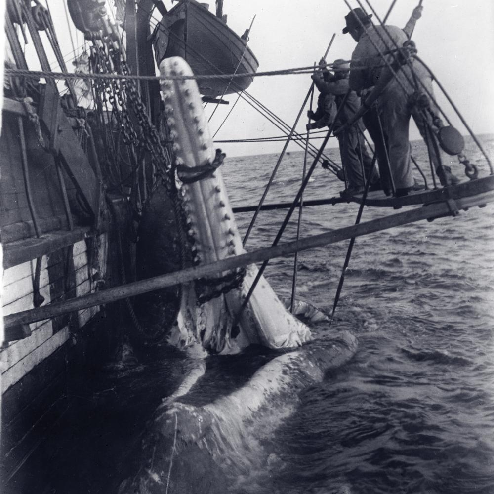 Whaling The Old Way | National Endowment for the Humanities
