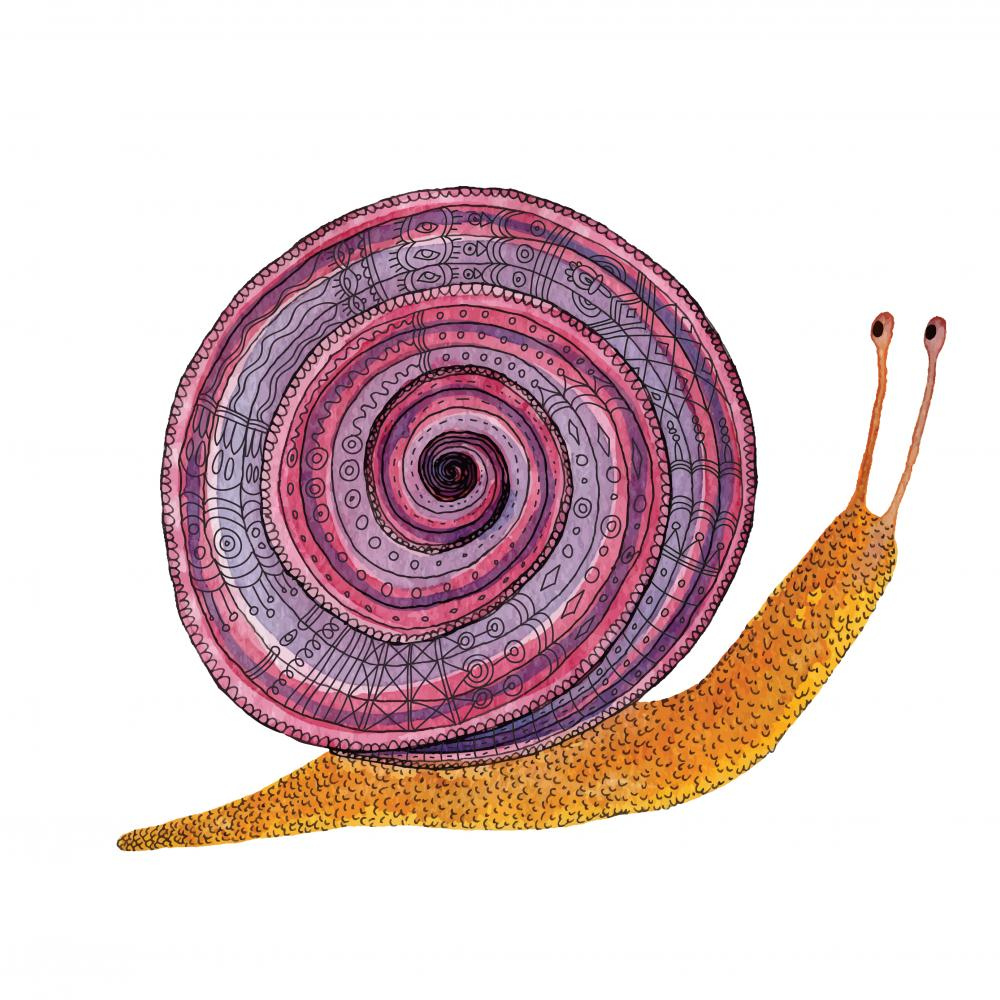 drawing of a snail with a purple and pink, spiral-patterned shell