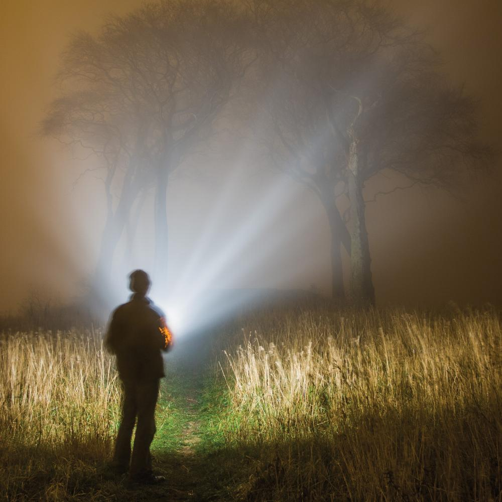 A man in a red jacket with his back to the viewer shines a bright flashlight onto a grassy swamp area, fringed with trees