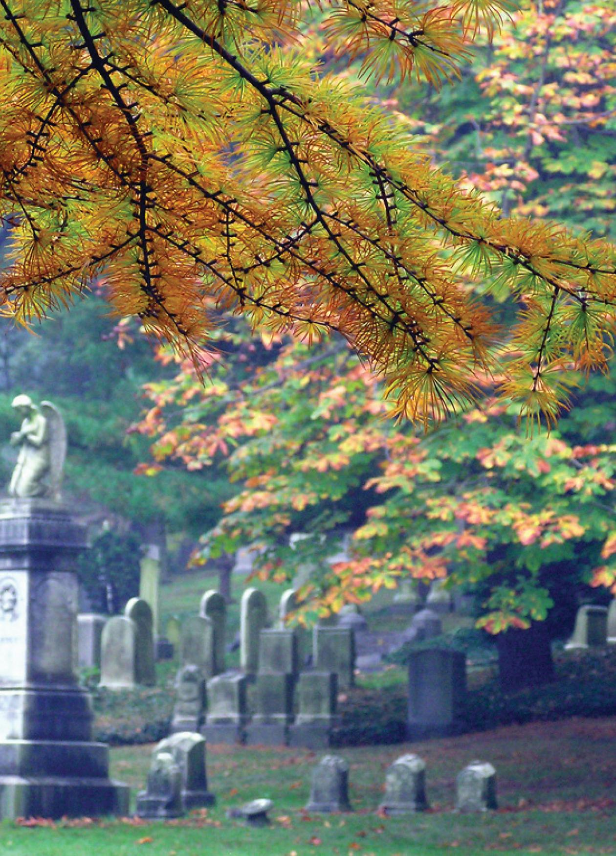 Photograph of cemetery with overhanging trees