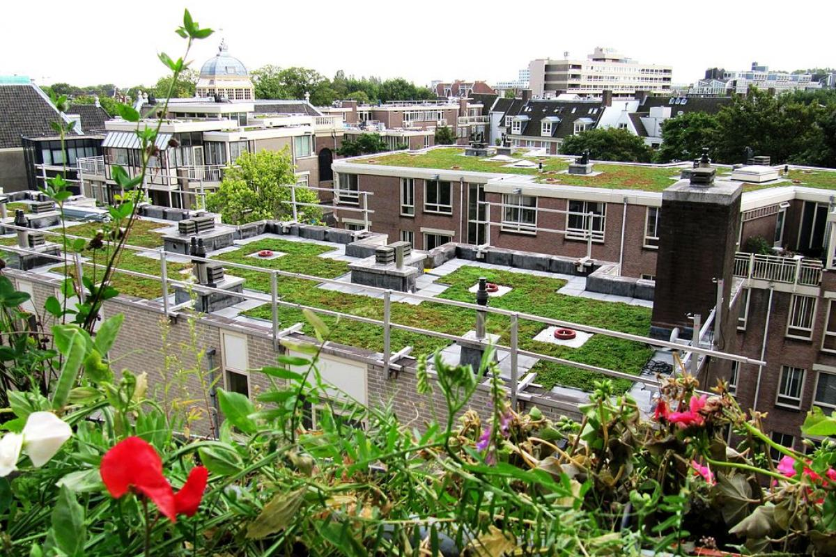 Green roof on residential complex.