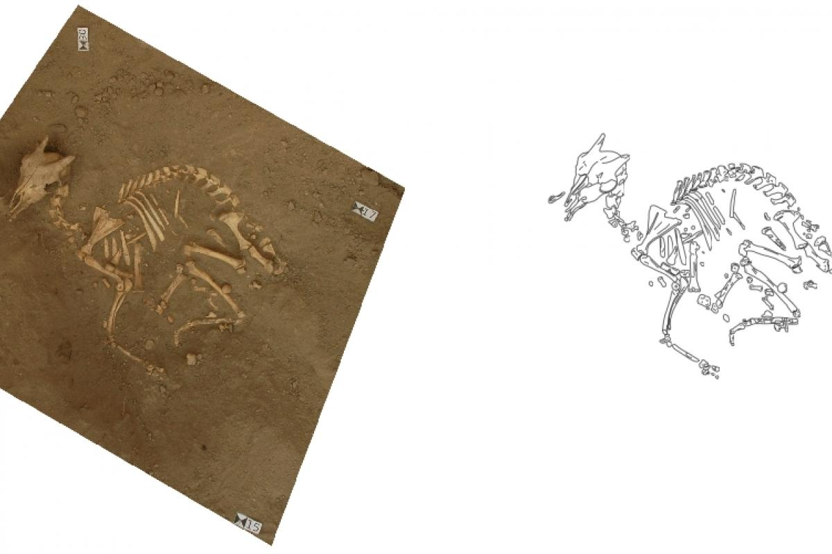 Example of photomapping, used on the skeleton of an aramus