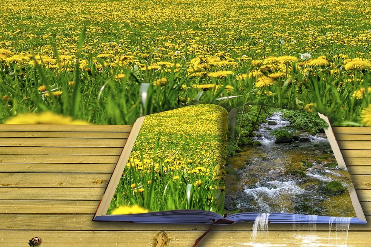 Illustration of an open book in a field of yellow wildflowers
