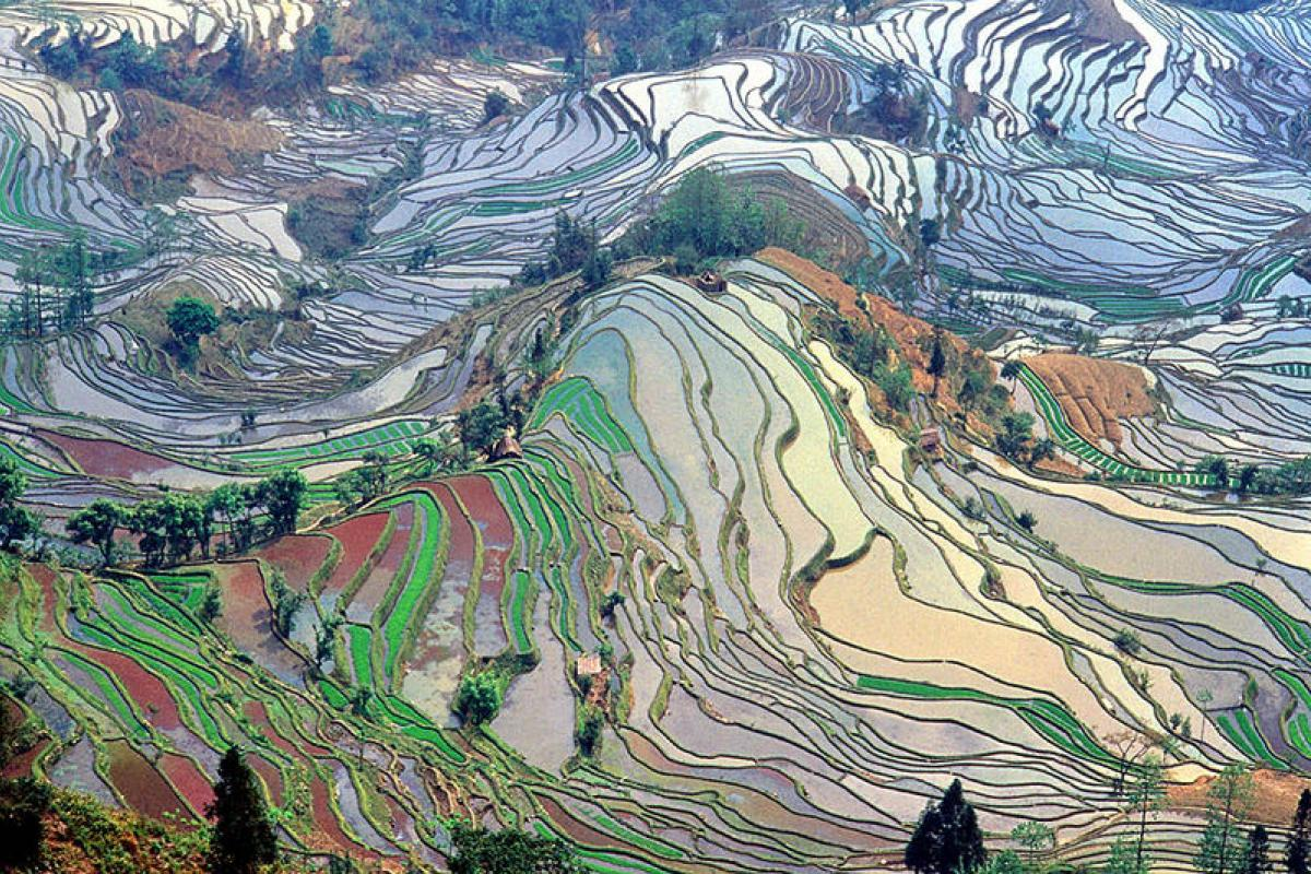 A terraced agricultural field in China, seen from a neighboring hillside.