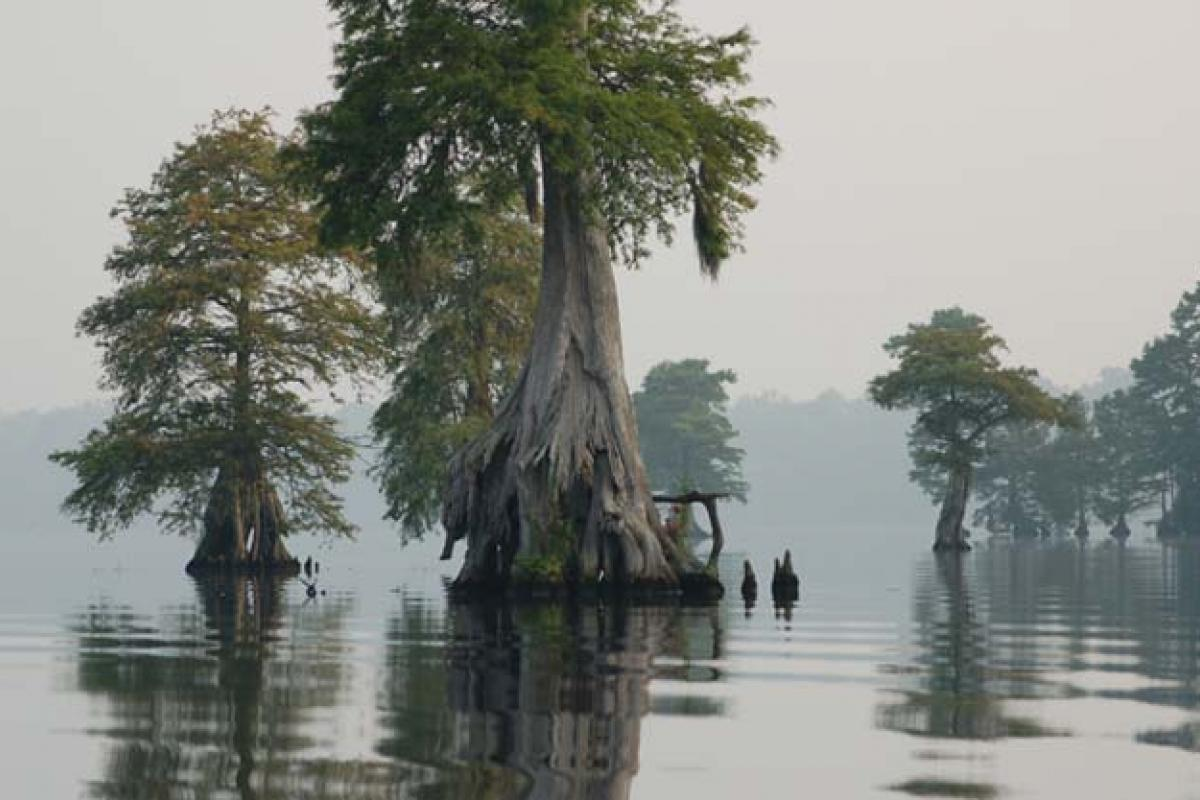 photo of the Great Dismal Swamp