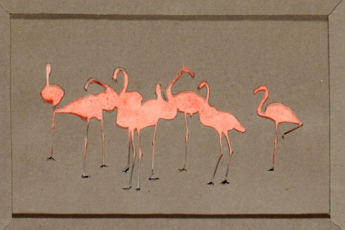 Flamingoes, study folder for the book Concealing Coloration in the Animal Kingdom by Abbott Handerson Thayer.