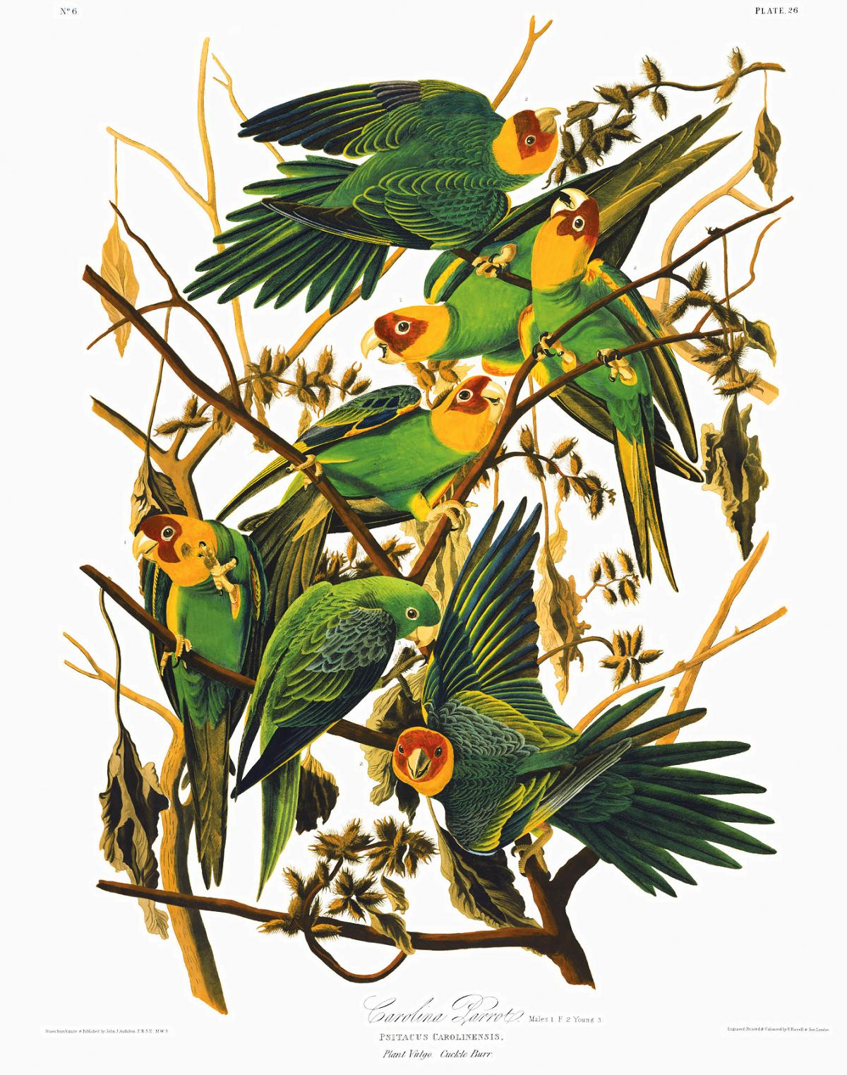 painting of seven green parakeets in various poses