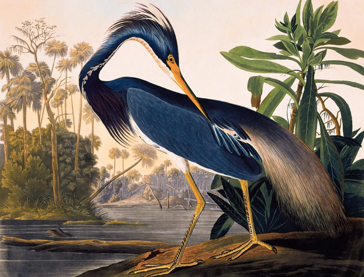 painting of a large blue bird on bank of river