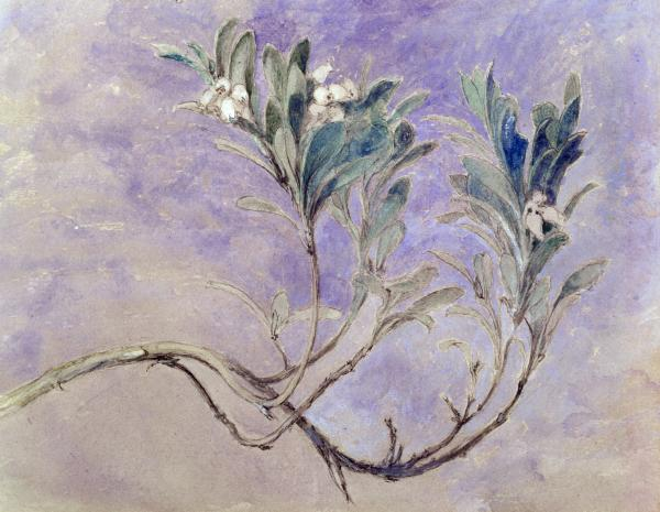 Painting of a branch of myrtle tree