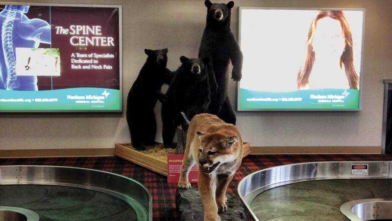 A baggage claim conveyor belt with a stuffed cougar on it.