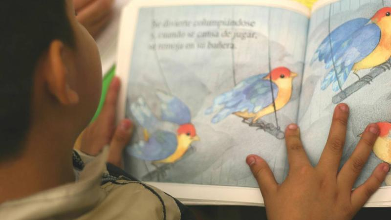 an over-the-shoulder view of a child reading a colorful picture book