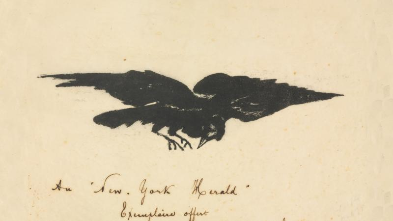 Black raven with spread wings, on a tan background