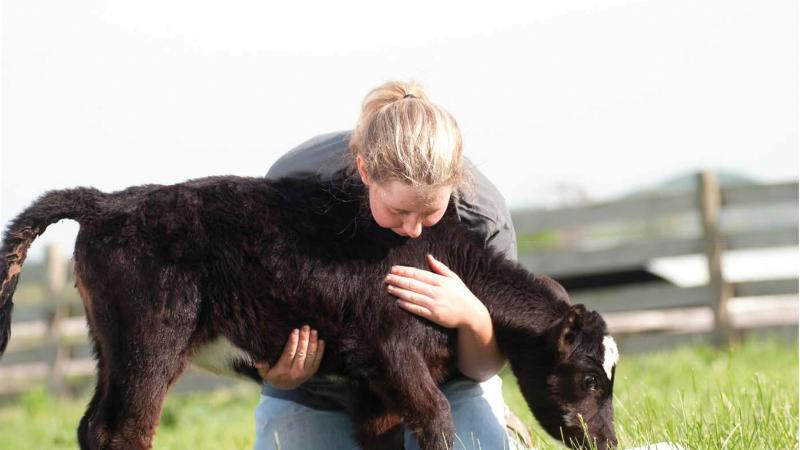 Student holding a black calf, helping it graze