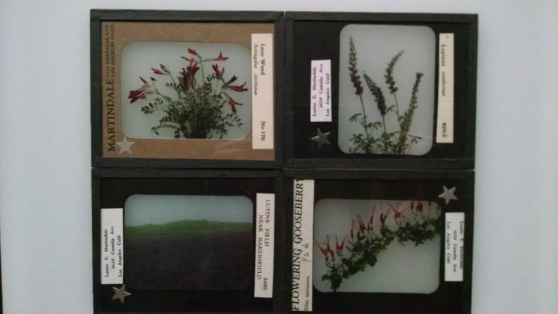 Lustin E. Martindale Collection: Hand-tinted Glass Slides