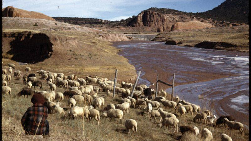 Sheep herding on the Navajo reservation