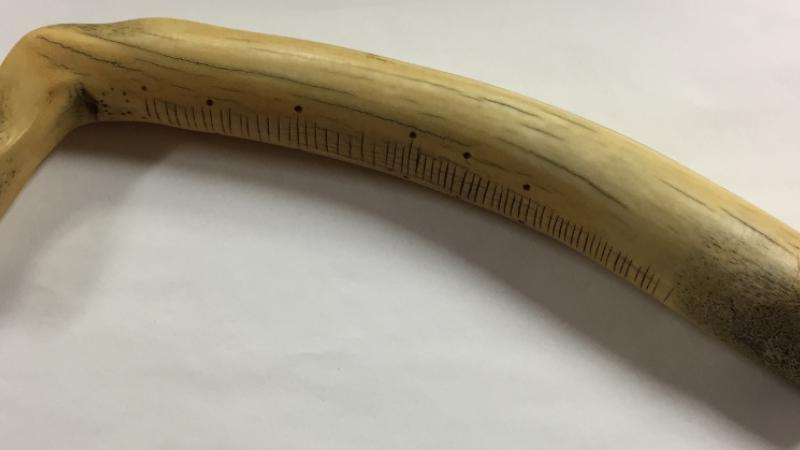photograph of buffalo bone