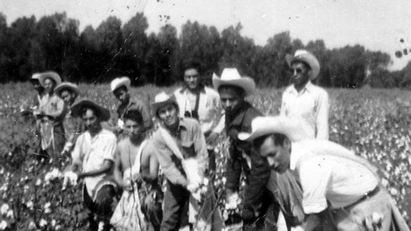 Braceros in eastern Arkansas ca. 1950s